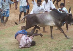 Wrestling of the Bulls